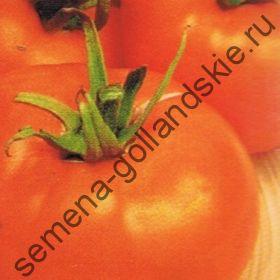 "Томат сорт ""АРАНСИЯ АПЕЛЬСИНОВОЕ ЯБЛОКО"" (Arancia) 10 семян"