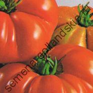 """Томат сорт """"КОСТОЛУТО ФИОРЕНТИНО""""(Costoluto Fiorentino) 10 семян"""