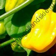 """Перец острый """"ХАБАНЕРО ЖЁЛТЫЙ"""" (Habanero geel)  10 семян"""